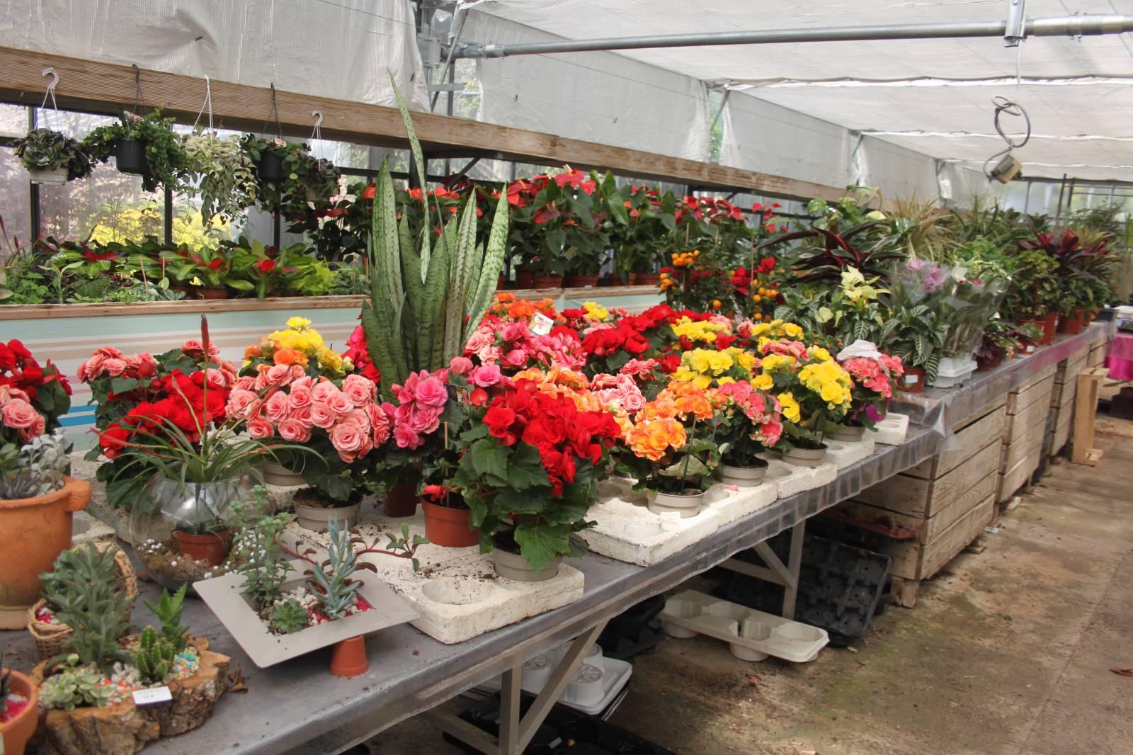 Plantes vertes et fleuries vente fleurs et plantes for Vente plantes vertes