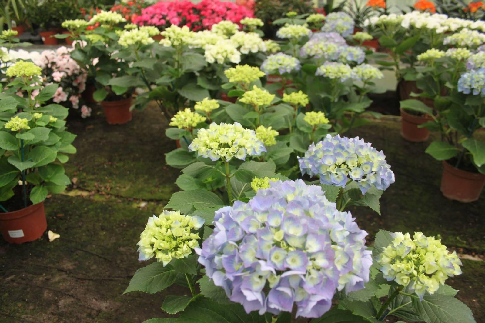 les plantes sp cial endroit ombrag vente fleurs et plantes aubagne la p pini re d 39 aubagne. Black Bedroom Furniture Sets. Home Design Ideas
